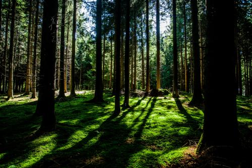 March 21st is International Forest Day